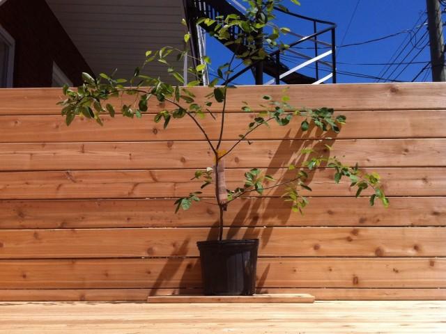 Terrasse et clôture Lajeunesse – cèdre